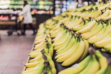pianta di banano in vaso banano alberi da frutto coltivazione banane
