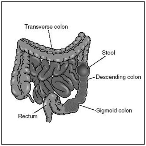 4 sections of large intestine design parts of the digestive system the digestive