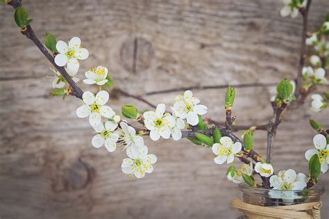 15 floral arrangements with flowering branches spring free images branch wood vase decoration food spring