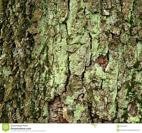 what is a tree trunk covered with 4 letters what is a tree trunk covered with 4 letters