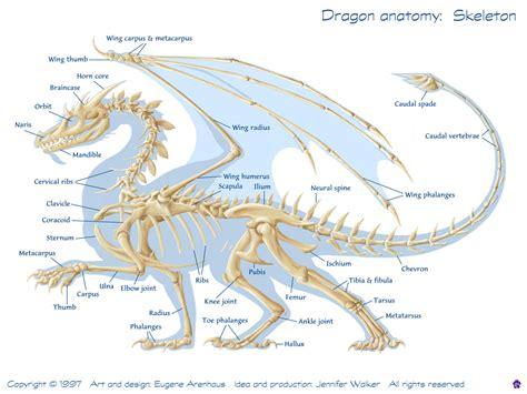 skeleton anatomy anatomy anatomy skeleton