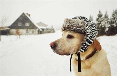 do puppies get cold when is cold cold for your the wagging
