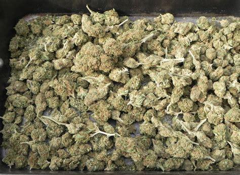 Was Kann Tun Um Größer Zu Werden by Wie Autoflowering Cannabis Angebaut Wird Royal Seeds