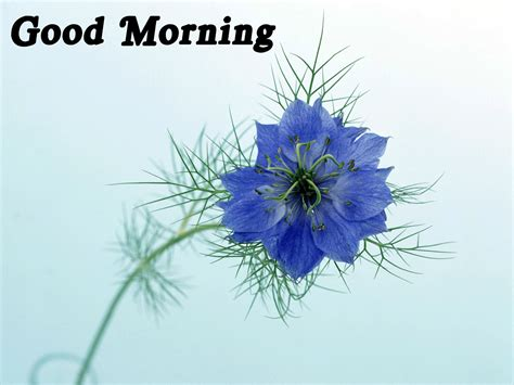 free wallpaper of good morning good morning wallpaper free download wallpaper