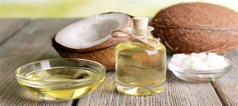 khasiat minyak kelapa bagi ayam aduan zeusbola