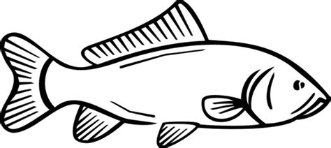 carp fish coloring pages free how to draw koi carp coloring pages