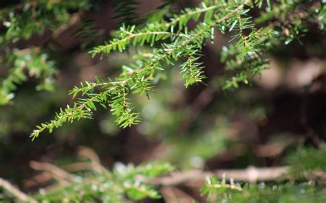 tree bokeh nv26 tree bokeh plant wood nature wallpaper