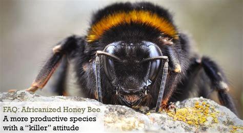 faq africanized honey bee gc termite control articles