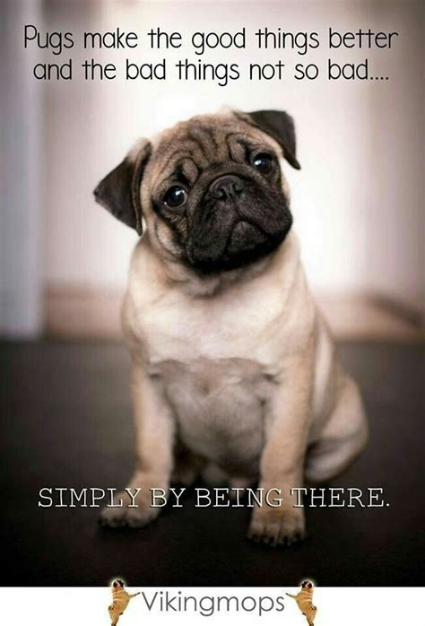quotes on pugs best 25 pug quotes ideas on