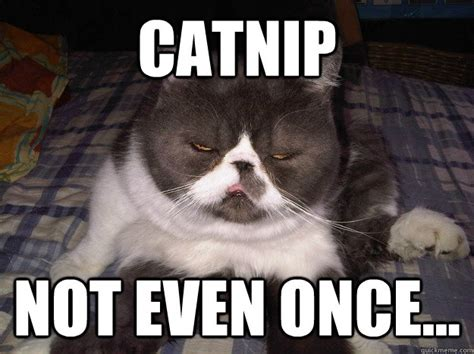 Not Even Once Meme - catnip not even once misc quickmeme