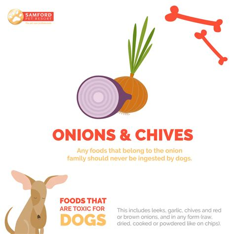 are onions poisonous to dogs 7 foods that are toxic for dogs samford pet resort