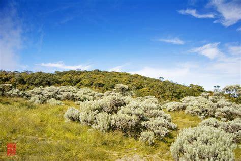 membuat puisi tentang gunung 11 fakta gunung gede pangrango yang tak banyak diketahui orang