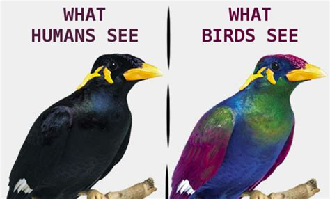 uv light for birds what is the use of color vision p2praveen