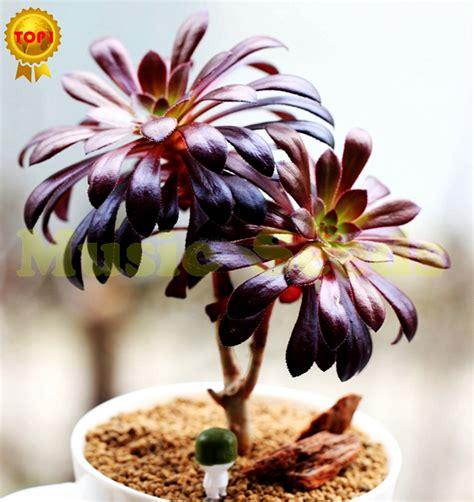fiore di loto giapponese fiore di loto giapponese recensioni acquisti