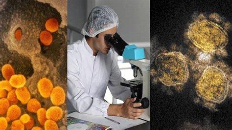 berduri  gambar virus corona diperbesar bentuk