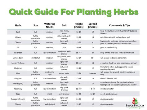 herb growing chart simple tips from planting harvesting and storing herbs