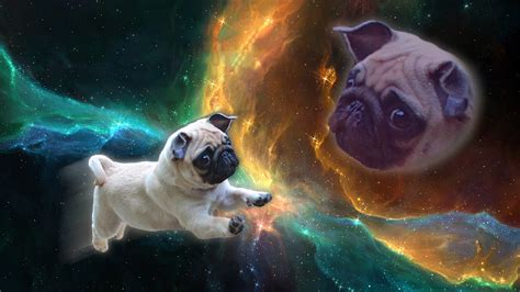 wallpaper pug space pug wallpaper 4 background wallpaper dogbreedswallpapers