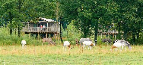 Les Lodges Du Pal 370 by Les Lodges Du Pal Tarifs Des S 233 Jours Et Nuits Dans Un Zoo