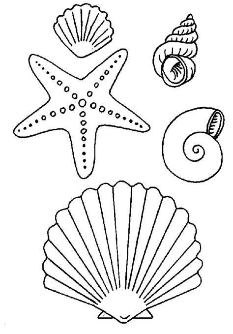 seashells coloring pages coloring home
