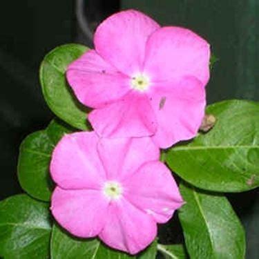 invio fiori invio fiori per guarigioni fiore invio fiori per