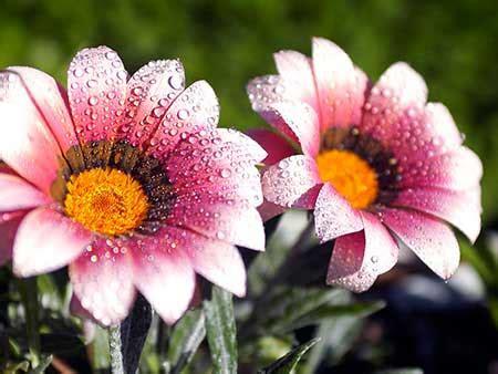 imagenes lindas de cumpleaños flor linda fotos dicas imagens flores lindas maravilhosas