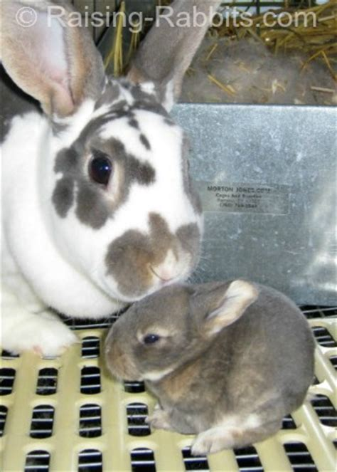 predator prey rabbit predator info   rabbits stay