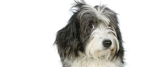 barking doorbell ask an expert doorbell barking modern magazine