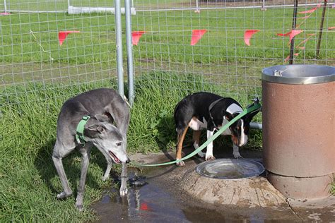 how to tell if your is dehydrated how to tell if your is dehydrated and what to do iheartdogs