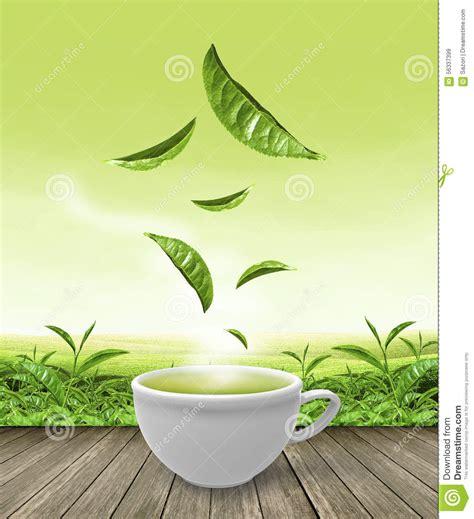 wallpaper green tea green tea leaf wallpaper www imgkid com the image kid