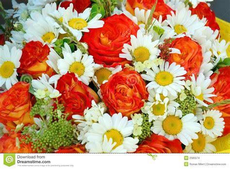 imagens de flores e rosas rosas e margaridas vermelhas imagens de stock imagem