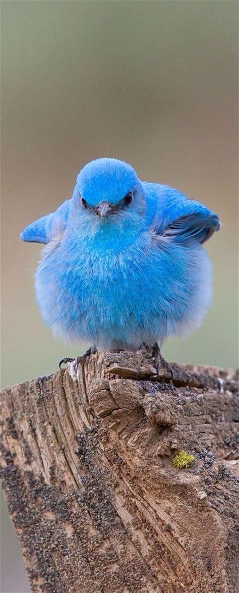 oompa loompa doobeedeedoo here s a bird that looks like