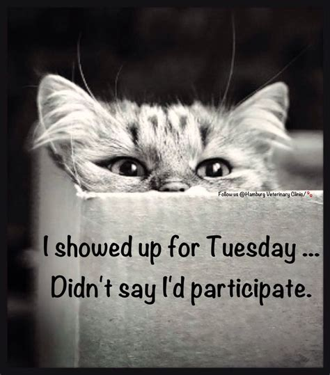tuesday humor animal funny cat humor cute cats