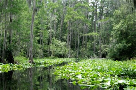 okefenokee boat rentals explore southern history stephen c foster state park