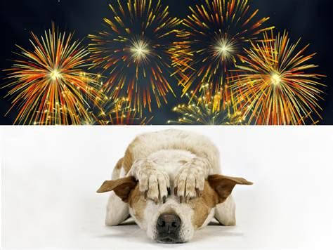 dogs and fireworks how to prepare your for july 4th fireworks today gt pets today