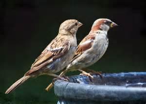 how to relocate a bird nest conscious companion