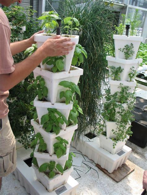 vertical planting vertical planting stacked pots of basil garden