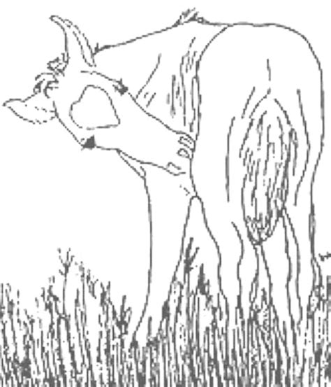 coloring pages of horse and foal realistic foal coloring pages www pixshark com images
