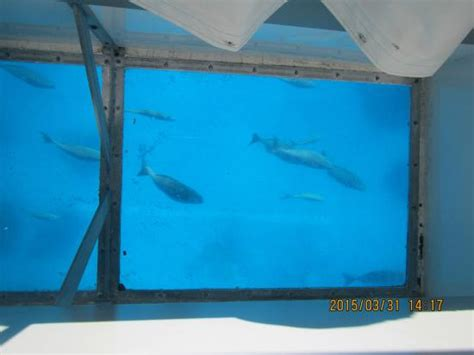 glass bottom boat freeport glass bottom boat picture of grand lucayan bahamas