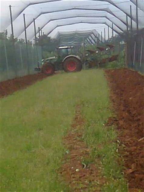 gabbie per fagiani le nostre voliere allevamento selvaggina piovesan