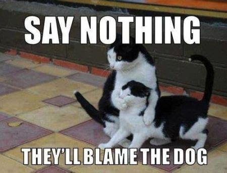 Dog And Cat Memes - w e e k e n d means laughter the obama diary