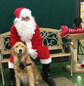 golden retriever rescue melbourne pet photos with santa pet supermarket in melbourne golden retriever rescue of mid