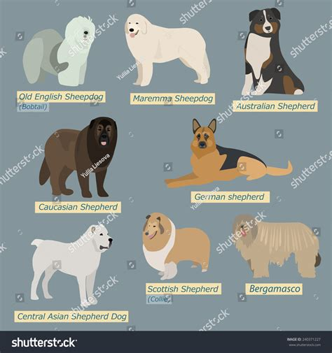 types of sheep dogs simple silhouettes dogs types sheepdogs flat stock vector 240371227