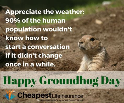 groundhog day insurance 17 best images about memes on your gifts