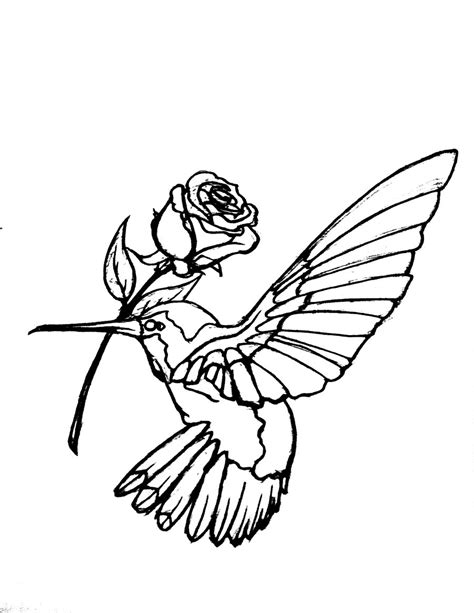 Hummingbird Outline Picture by Free Hummingbird Clipart Pictures Clipartix