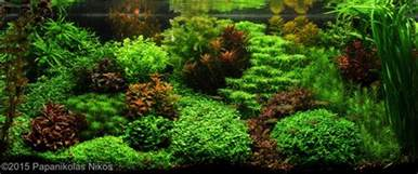 fish tank aquascape designs aquarium aquascape a style from the 1930s