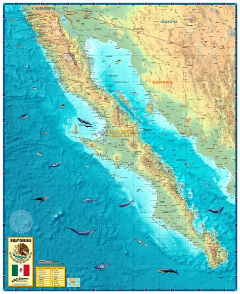 baja map mexico baja mexico peninsula wall map maps