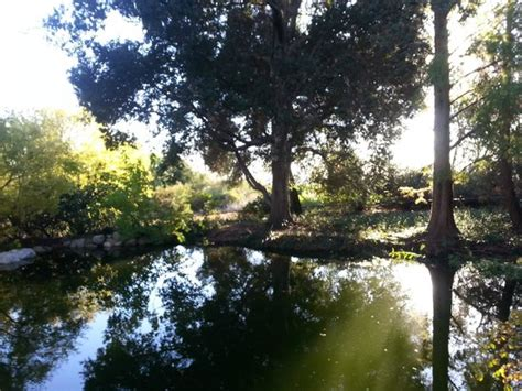 Claremont Botanical Gardens by Reflection In Benjamin Pond Picture Of Rancho Santa