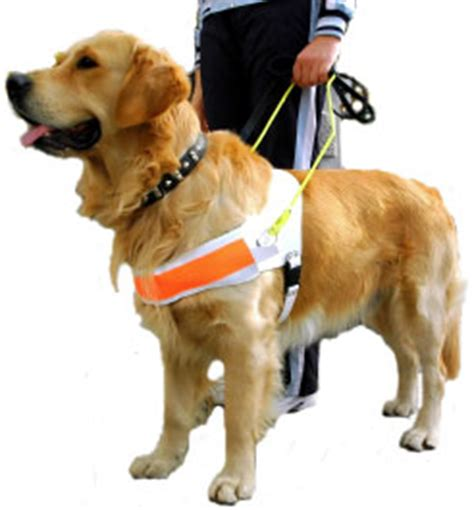 how do they seeing eye dogs vision loss quest ncbddd cdc