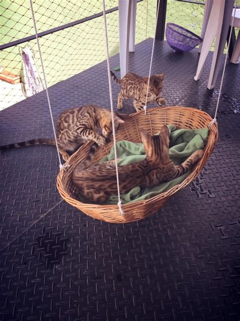 Cat Hammock Chair by The 25 Best Outdoor Cat Enclosure Ideas On