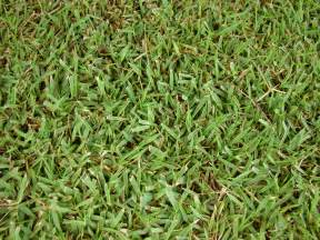 types of lawn grasses for warm climates
